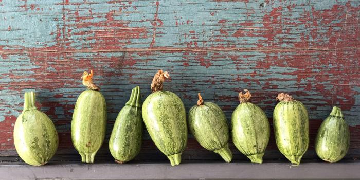 Zucchine pantesche