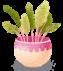 plant-02-lcdppantelleria