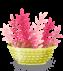 plant-03-lcdppantelleria